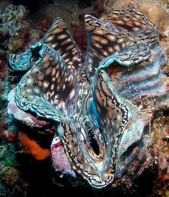 127 Best Coral Shells Reefs Ocean Habitats Images On Pinterest