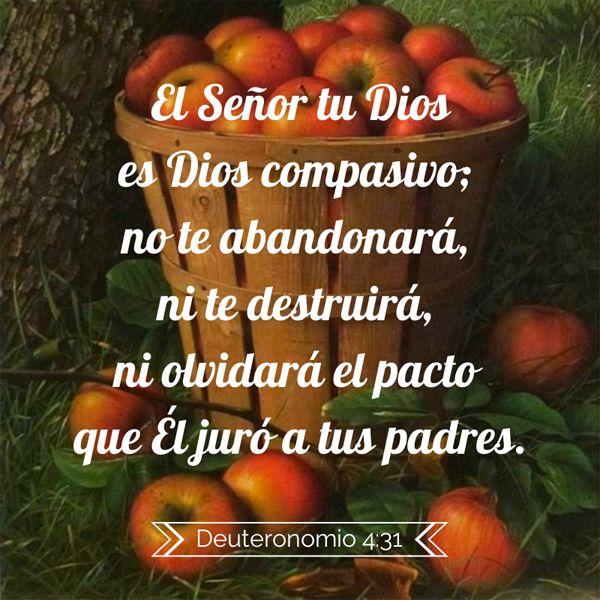 El Señor tu Dios es Dios compasivo; no te abandonará, ni te destruirá, ni olvidará el pacto que El juró a tus padres. Deuteronomio 4:31 #Biblia