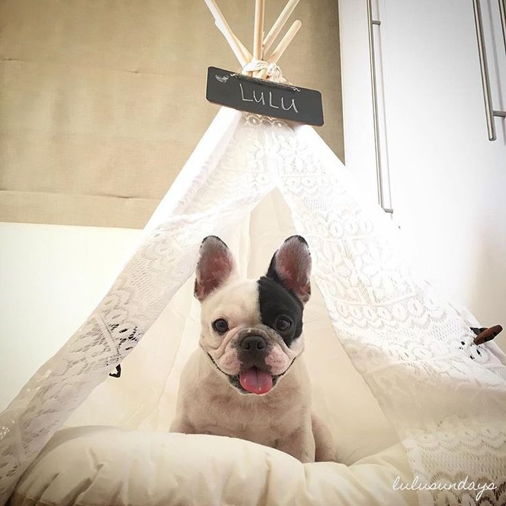 Princess Lulu in her very own tepee - French lace, no less!