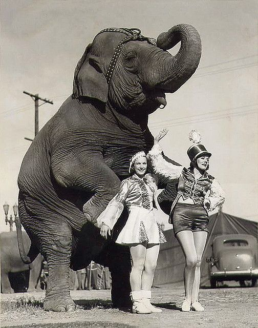 circus gals with standing elephant by carbonated, via Flickr