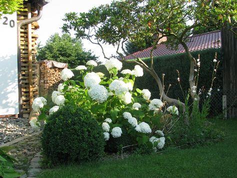 48 besten hortensien garten bilder auf pinterest hortensien garten hortensien und blumen. Black Bedroom Furniture Sets. Home Design Ideas
