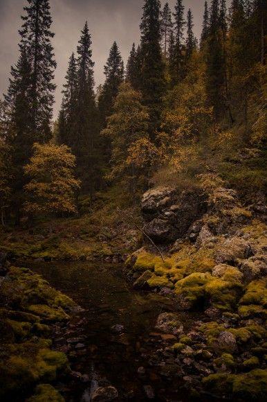 Scenes of Lapland: Oulanka National Park and Pyhätunturi   Aarography: Helsinki hääkuvaaja, Washington D.C, & International Wedding Photogra...