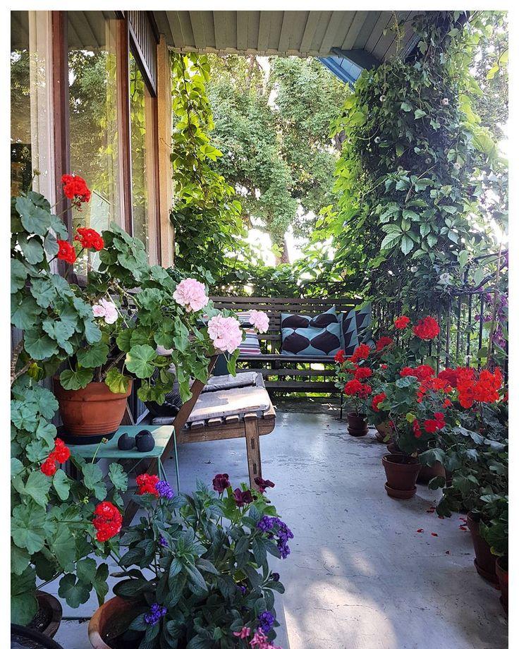 Universums mitt. ♡  #mitt60talshus #balkong #terass #pelargon #pelargonium #trädgård #garden #sommamorgon #krukor