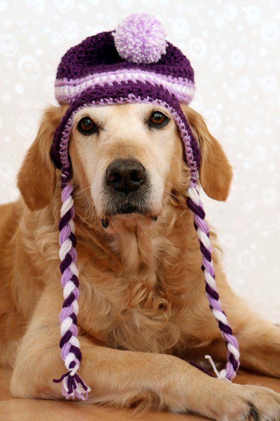 Dog Hat 86e289c87a9