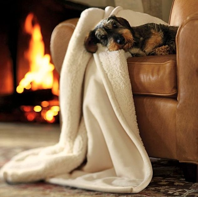 a doggie, a log fire, a good armchair and a soft blanket ... what else???