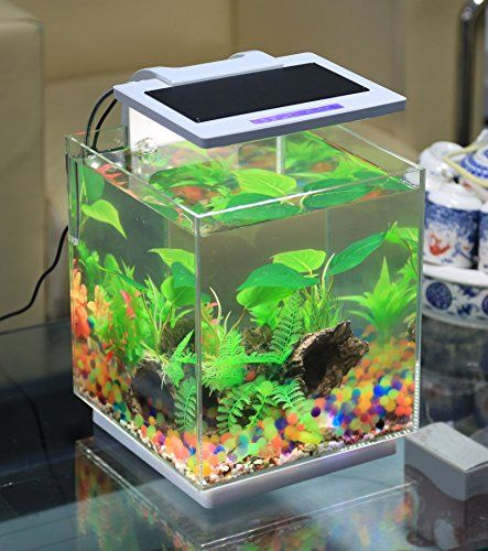 The Vepotek 4 Gallon Fish Tank. The tank itself is made out of high strength safe tempered glass. The Special designed light kit includes multiple function settings and a built in timer and water temperature sensor. Click for more details. #betta #bettas #bettatank #bettasplendens #bettafish #fish #aquarium #fishtank #tropicalfish #freshwater