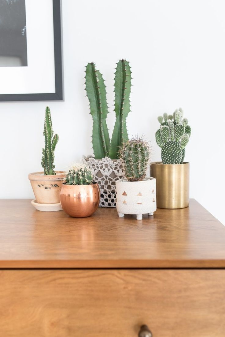 25 best ideas about cactus decor on pinterest colour - Pot de decoration ...