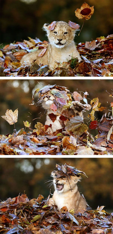 Ζώα χαίρονται το φθινόπωρο!