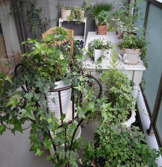 Balcony Garden Ideas: Best 25+ Apartment Balcony Garden Ideas On Pinterest