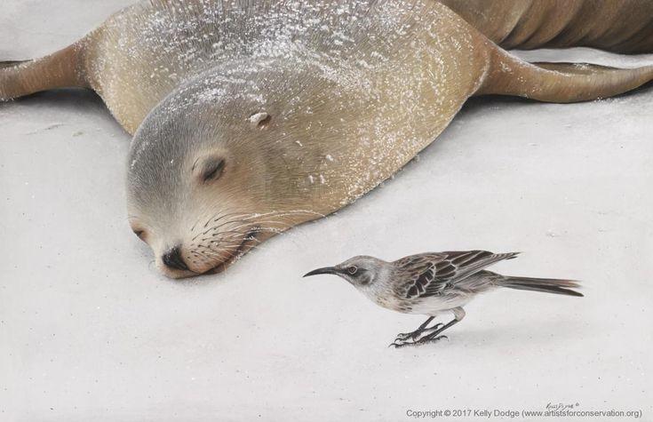 sealion and mockingbird