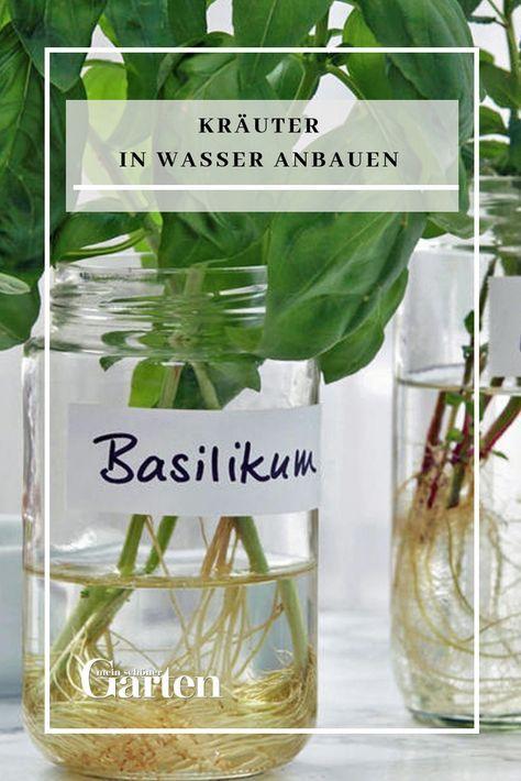 Kräuter In Wasser Anbauen Pflanzen Hydrokultur Garten