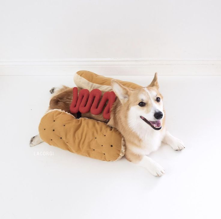 Dogs dressed up like food! What's cuter than a dog dressed up as a hot dog? How about as a donut? You're going to fall in love with these adorable dogs dressed up like food.