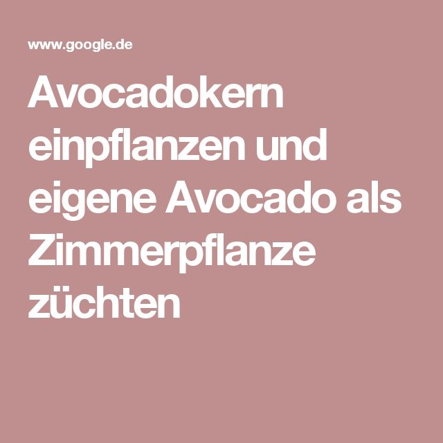 25 best ideas about avocado z chten on pinterest avocado pflanze avocado pflanze and avocado. Black Bedroom Furniture Sets. Home Design Ideas