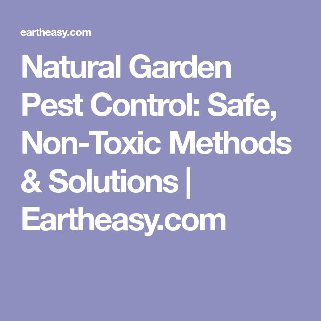 Natural Garden Pest Control: Safe, Non-Toxic Methods & Solutions | Eartheasy.com