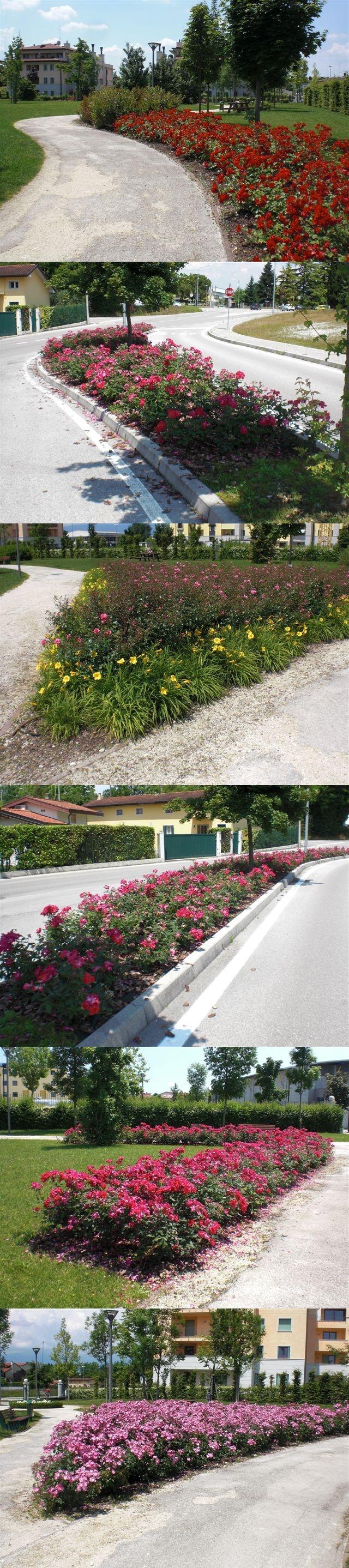 Maniaci delle curve fiorite! Gea fa fiorire il parco Cimolai a Pordenone! #pordenone #green