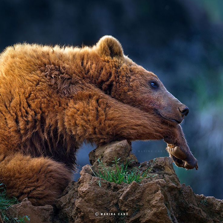 Photography Animals Funny Creative Products Weird More...                                                         The Majestic Beauty Of Wild Animals Captured By Marina Cano