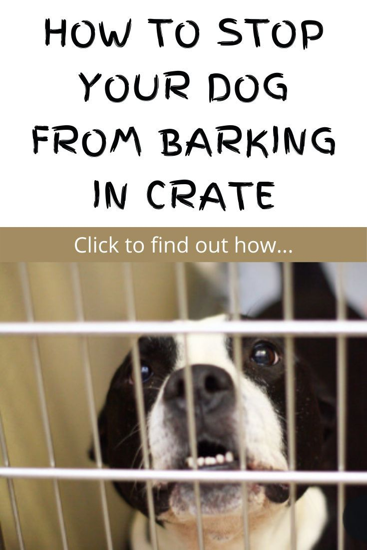 How To Stop Your Dog From Barking In Crate Online Dog Training Your Dog Dogs