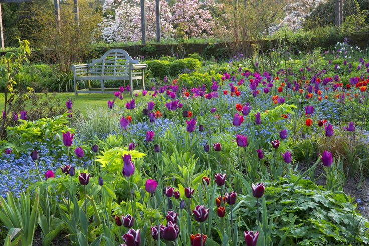 Spring Tulips @gravetyemanor  will create a sea of colour in their famous flower garden. Planted in a naturalistic style, that was pioneered by Gravetye Manor's most famous owner and world famous gardener William Robinson. The stunning tulips displays will be surrounded by another beautiful display on the Azalea bank providing a wall of colour. Later on in the spring, foxgloves and lupins take over from the stunning tulips, providing yet more beautiful blooms in the flower garden.