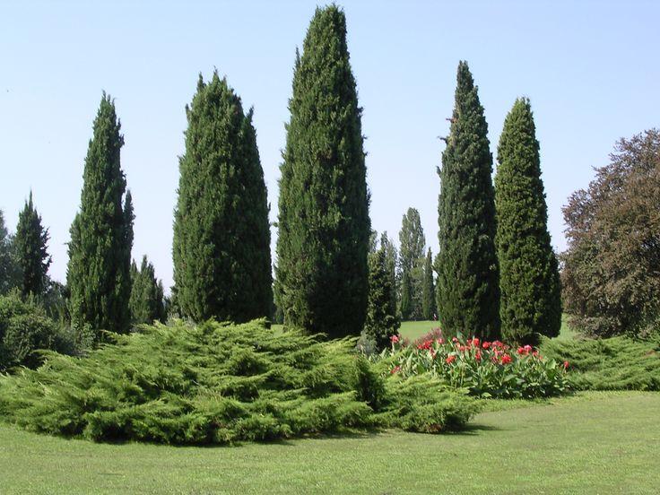 5 variedades de ciprés para jardín - http://www.jardineriaon.com/variedades-de-cipres.html #plantas