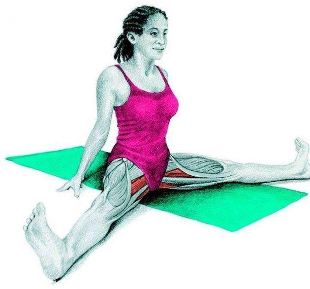Анатомия стретчинга: поперечная складка вперёд