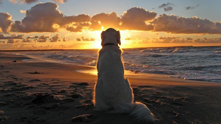 Pin By Mymyrtlebeach On Myrtle Beach Accommodations Animals Dog Beach Amazing Sunsets