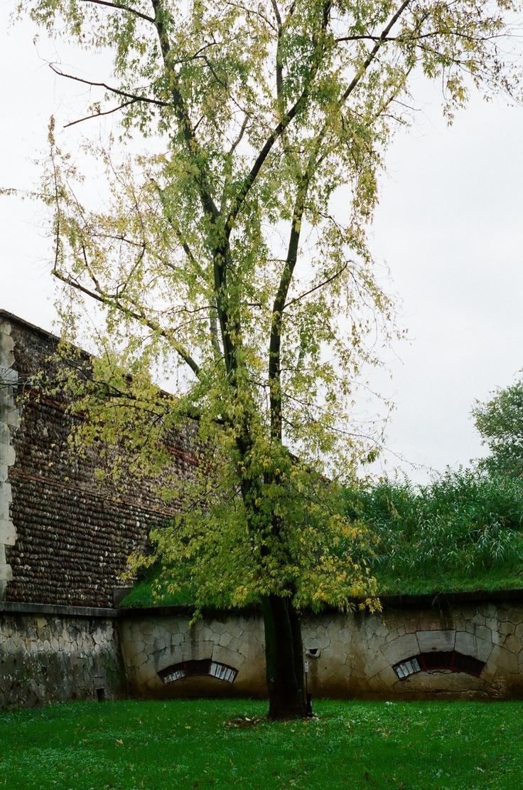 Austrian walls - Campo Marzio - Pellegrini Battery
