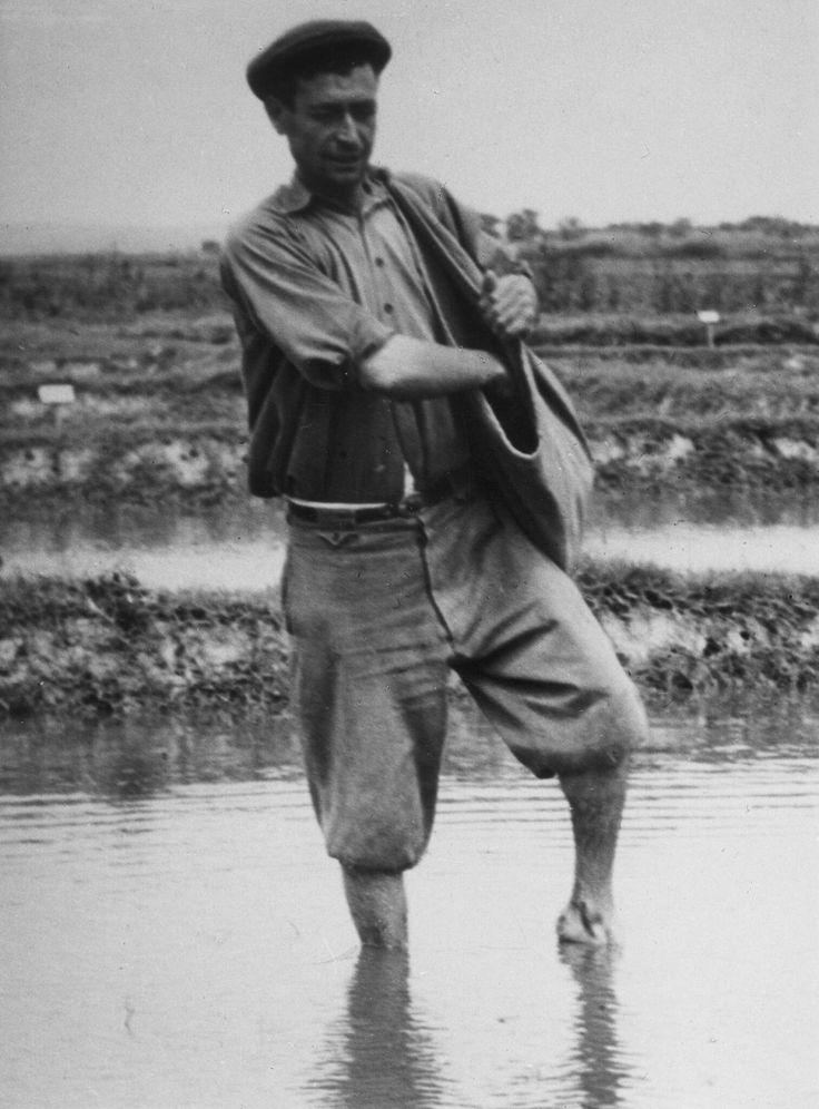 Artur Pastor - Semear arroz, décadas de 40/50.