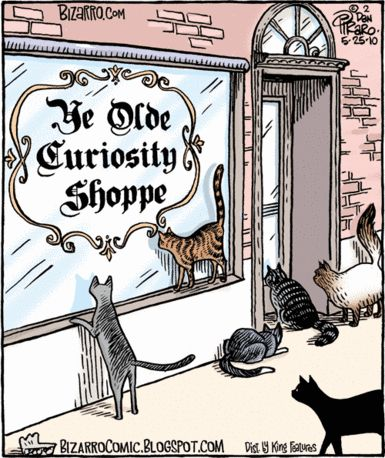 cats and curiosity - Bizarro by Dan Piraro. May 25, 2010