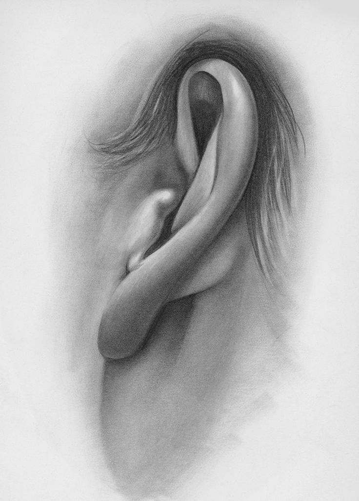 Нарисованное ухо картинки