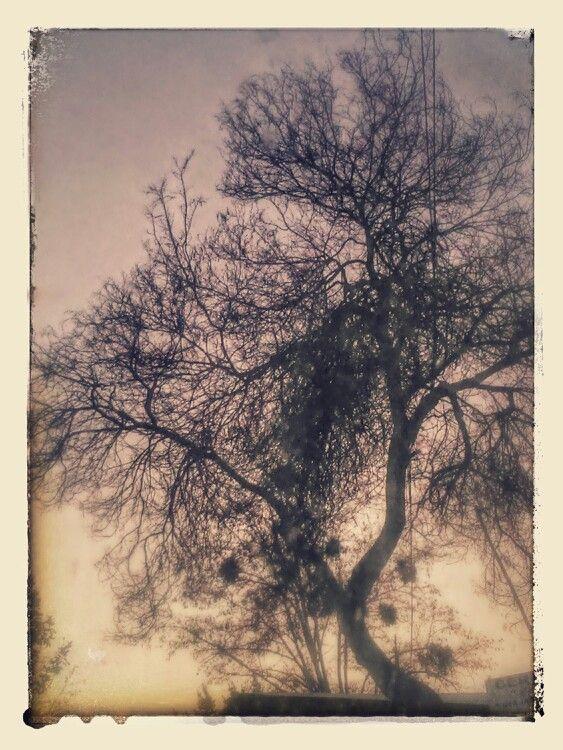Arbol en invierno