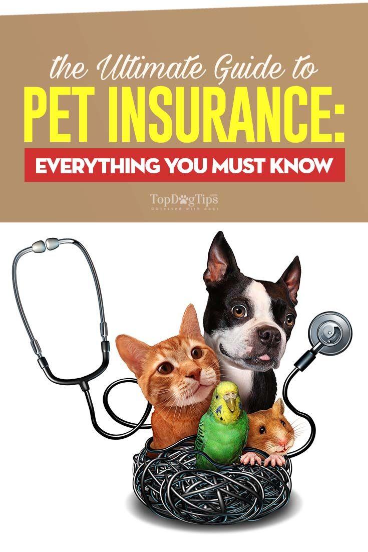 Pet Insurance A Beginner S Guide Pet Insurance Pet Insurance Reviews Dog Insurance