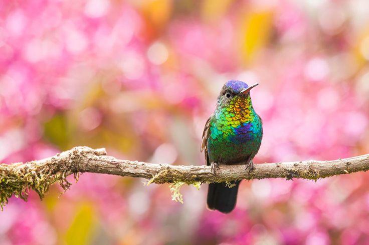 20 Beautiful Close-up Photographs of Hummingbirds