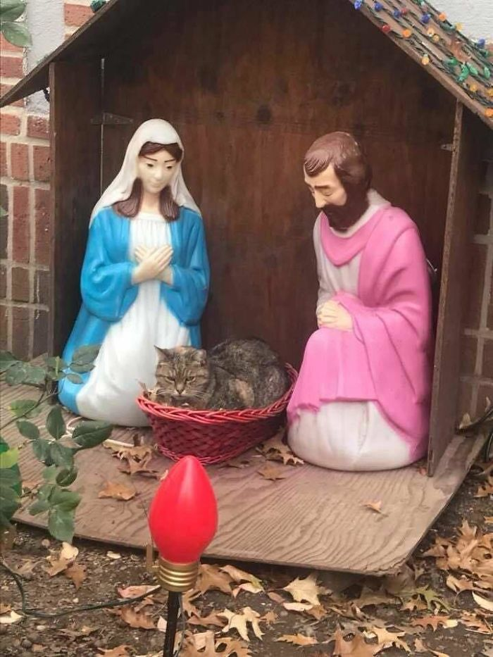 Everyone Can't Stop Laughing After This Grumpy Cat Crashed A Nativity Scene In NYC | Bored Panda