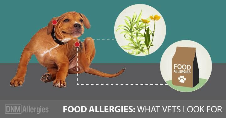 5 Signs Your Dog Has Food Allergies Pet Allergies Dog Rash