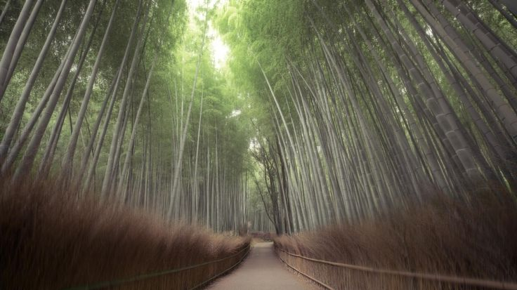 Japan  (с) Hidenobu Suzuki
