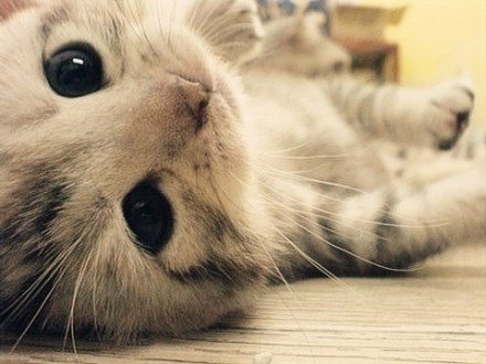 kitten's eyes are the most adorable