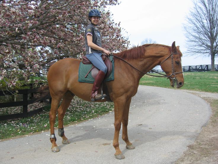 Taking the Blundies for a ride on Simon in Louisville, KY #yourboots