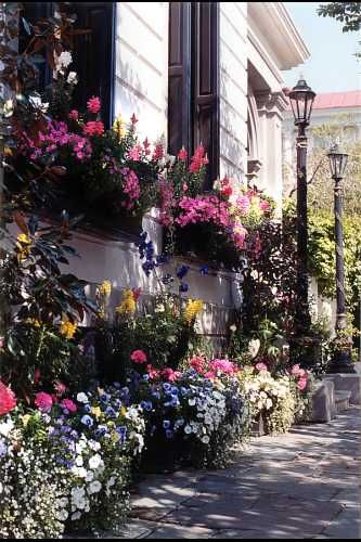 Window boxes for front of home*