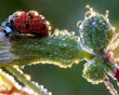 A ladybug dressed in dew sparkles in the morning sun. German photographer Jens Kolk took this incredible photo in his garden in Potsdam. (Photo: Jens Kolk / Mercury Press Agency Ltd. / Caters News)