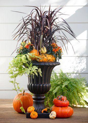 Autumn Arrangement, Sweet Potato Vine, Purple Fountain Grass and pumpkins & gourds.