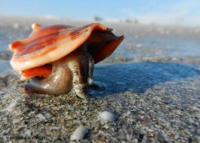 17 best images about sanibel on pinterest scallops for Sanibel fish house
