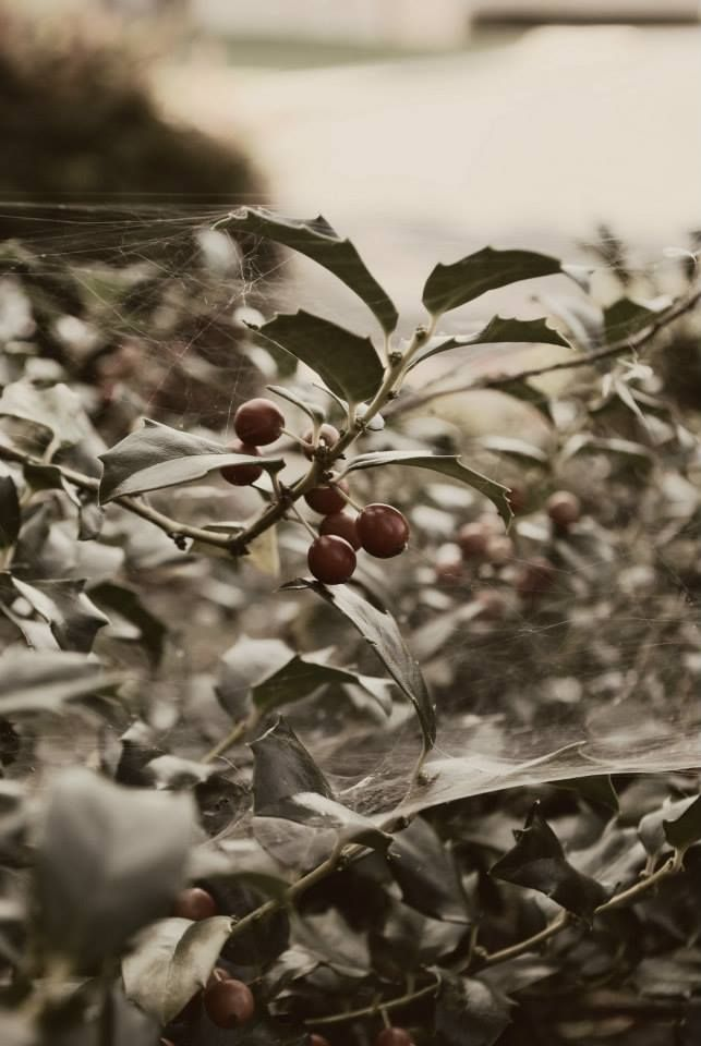Spider web in berry bush. Perspective.  Copyright: Unfading Worship Photography Taken and Edited By Sarah Myers