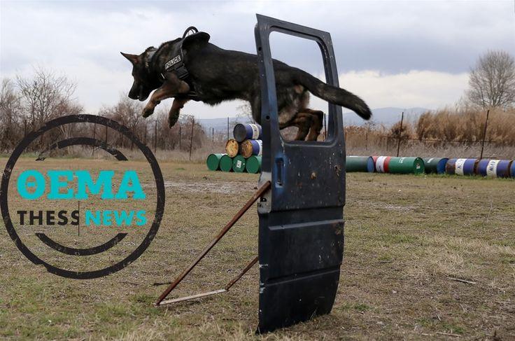 Οι Ειδικές Δυνάμεις της αστυνομίας στη Βόρεια Ελλάδα - Το αφιέρωμα της ThessNews (ΦΩΤΟ) > http://arenafm.gr/?p=298131