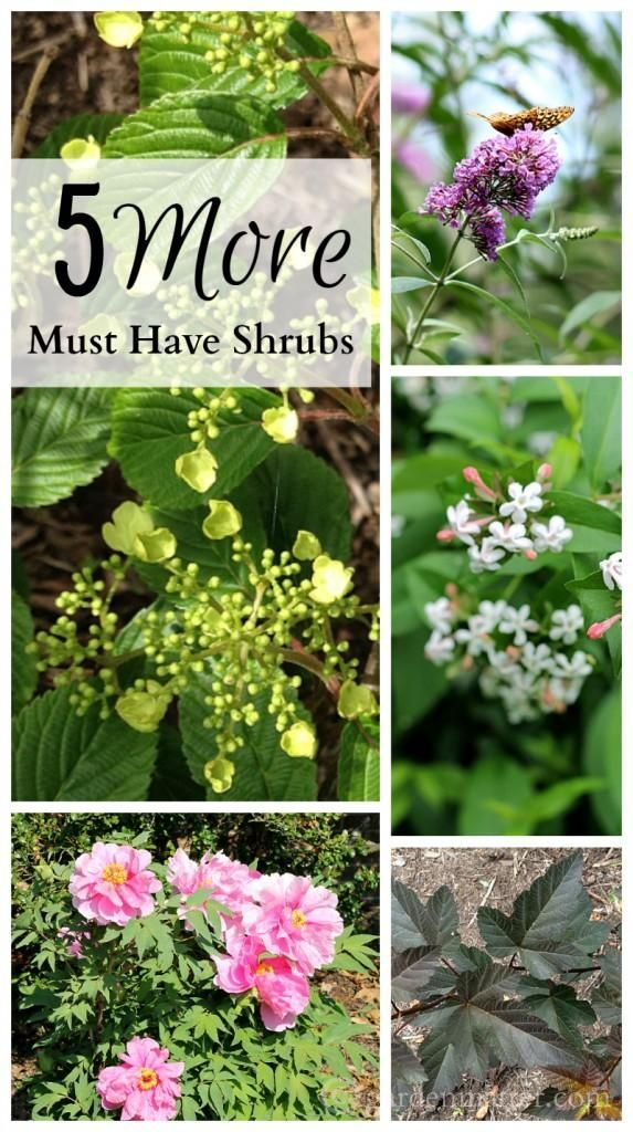 465 best Shrubs and bushes images on Pinterest Flower gardening
