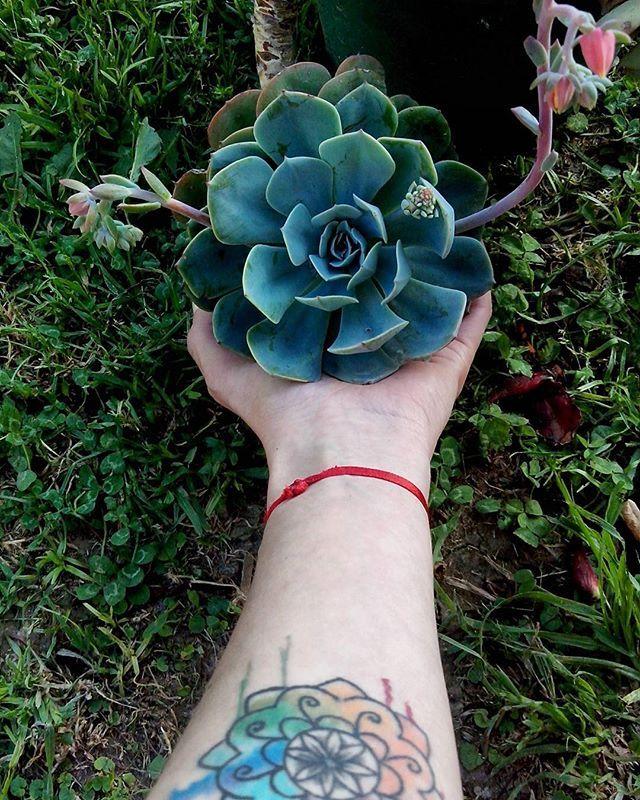 Echeveria  #lefrudecojardin #cactus #succulents #succulentcity #succulove #succulover #echeveria #tattoo #tattoos #domingo #sunday #sundaymood