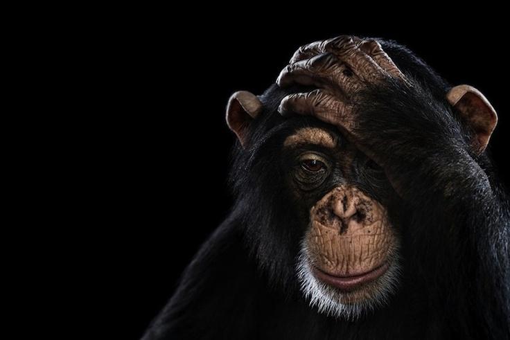 Puzzled by Brad Wilson. Портреты животных крупным планом