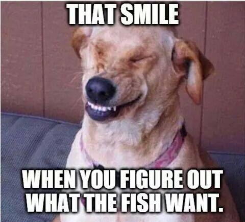 3e711e8ac8e07191da4d30aa97cf0711 light side spanish humor top 25 best funny fishing memes ideas on pinterest funny,Fishing Birthday Meme