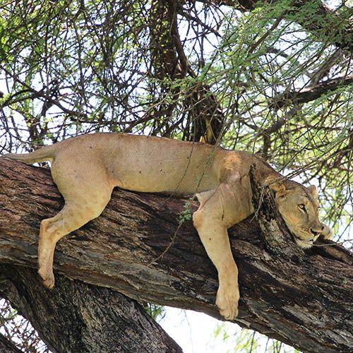 Elsa's Kopje,  Meru National Park, #Kenya