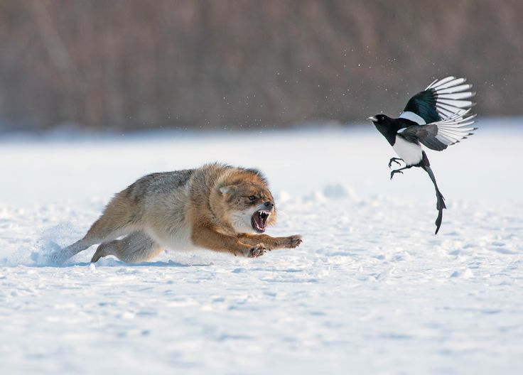 A jackal scares away a scavenger bird in this National Geographic Your Shot Photo of the Day.