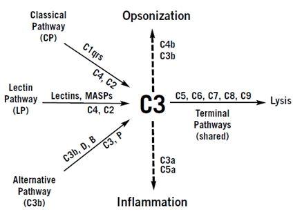 Complement Dificiencies Diagram